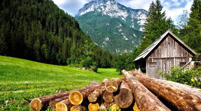 Au oprit un transport de lemne la Întorsura Buzăului